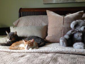kittens, cats, cat, kitten, bed, bedroom, bed linen, textiles, bedding, pet odors, bedroom odors, bedrooms, bed linen odors, real estate, resale, household odors, home odors, pet odors, odors in my home, smell, smelly, smells in my home, funky odors, funky smells, bad smells, bad smells in my home, total home, yourtotalhome.